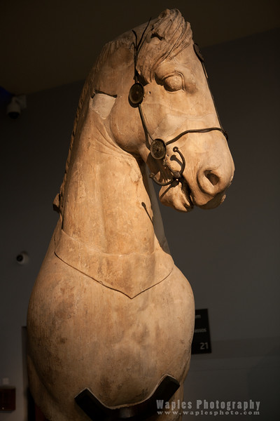 Horse with bit