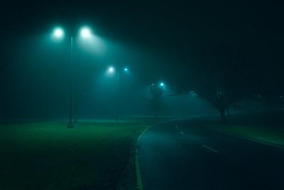 Foggy Park Strolls