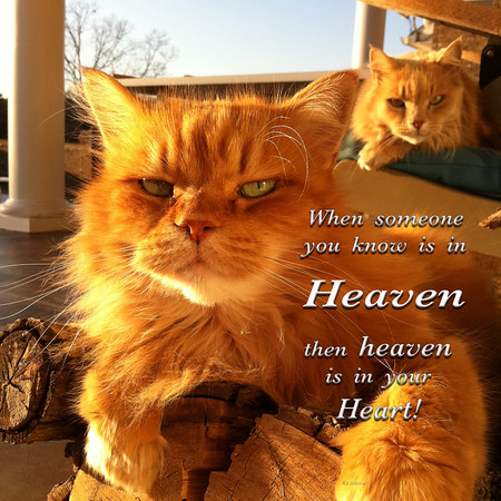 Cats_Heaven is in your heart copy