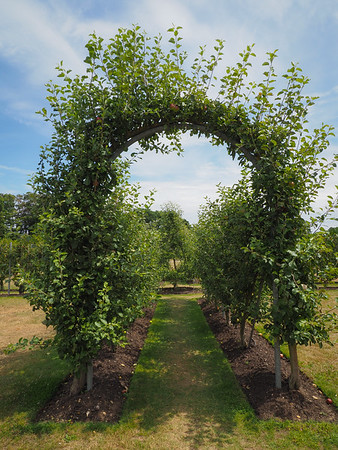 The fruit orchard.