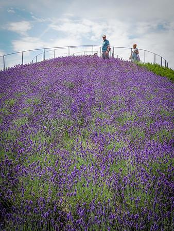 Lavender Hill.
