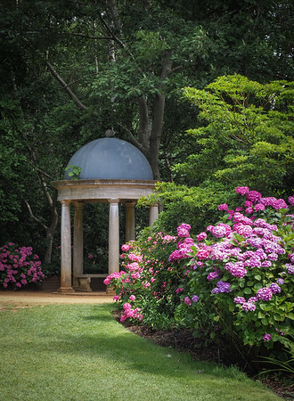 Peace and quiet in the secluded Hydrangea woodland.