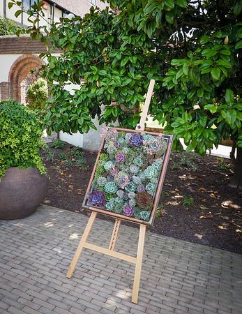 Echeveria framed art.