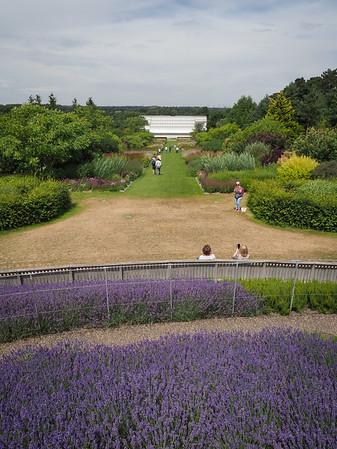 Lavender Hill view.