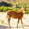 Baja Pony