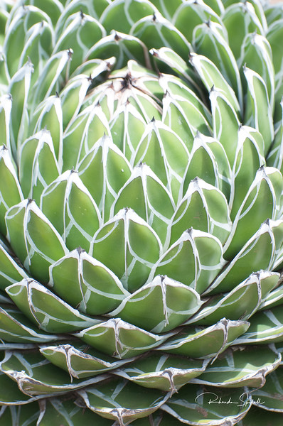 Symmetry of a Yucca