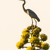 Heron on a Century Plant