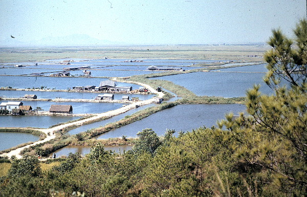 Rice Paddies on the DMZ with Red China