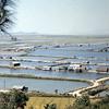 Rice Farmers Village