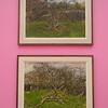 Fallen Tree & Fallen Tree in Blossom