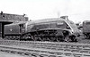 60015 QUICKSILVER - Gresley LNER Class A4 4-6-2 - built 09/35 by Doncaster Works as LNER No.2510 - 06/46 to LNER No.15, 12/48 to BR No.60015 - 04/63 withdrawn from 34A Kings Cross, where seen 08/62.