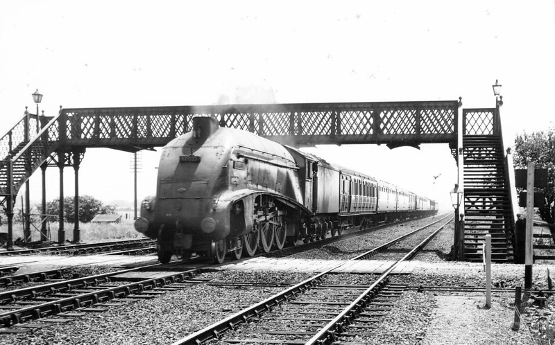 60033 SEAGULL - Gresley LNER Class A4 4-6-2 - built 06/38 by Doncaster Works as LNER No.4902 - 10/46 to LNER No.33, 04/48 to BR No.60033 - 12/62 withdrawn from 34A Kings Cross- seen here at Marholm on a down express in 1958.