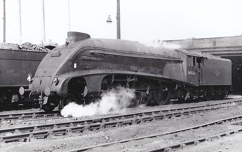 60026 MILES BEEVOR - Gresley LNER Class A4 4-6-2 - built 02/37 by Doncaster Works as LNER No.4485 - 05/46 to LNER No.26 - 09/47 original name KESTREL removed - 09/49 to BR No.60026 - 12/65 withdrawn from 61B Aberdeen Ferryhill - seen here at Darlington, 08/63.