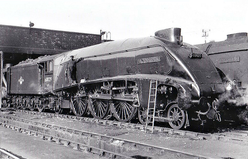 60029 WOODCOCK - Gresley LNER Class A4 4-6-2 - built 07/37 by Doncaster Works as LNER No.4493 - 05/46 to LNER No.29, 07/48 to BR No.60029 - 10/63 withdrawn from 34E New England - seen here at Kings Cross, 07/61.