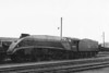 60004 WILLIAM WHITELAW - Gresley LNER Class A4 4-6-2 - built 12/37 by Doncaster Works as LNER No.4462 - 06/41 original name GREAT SNIPE removed, 08/46 to LNER No.4, 05/48 to BR No.60004 - 10/66 withdrawn from 61B Aberdeen Ferryhill - seen here at Darlington.