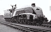 60021 WILD SWAN - Gresley LNER Class A4 4-6-2 - built 02/38 by Doncaster Works as LNER No.4467 - 05/46 to LNER No.21, 09/48 to BR No.60021 - 10/63 withdrawn from 34E New England - seen here at Grantham in 1948.