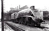 60017 SILVER FOX - Gresley LNER Class A4 4-6-2 - built 12/35 by Doncaster Works as LNER No.2512 - 09/46 to LNER No.17, 04/49 to BR No.60017 - 10/63 withdrawn from 34E New England - seen here at Doncaster, 02/62.