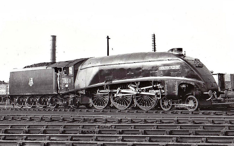 60031 GOLDEN PLOVER - Gresley LNER Class A4 4-6-2 - built 10/37 by Doncaster Works as LNER No.4497 - 05/46 to LNER No.31, 06/48 to BR No.60031 - 10/65 withdrawn from 65B St Rollox - seen here at Haymarket, 1956.