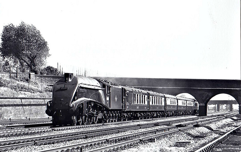 60008 DWIGHT D EISENHOWER - Gresley LNER Class A4 4-6-2 - built 09/37 by Doncaster Works as LNER No.4496 - 09/37 original name GOLDEN SHUTTLE removed - 11/46 to LNER No.8, 10/48 to BR No.60008 - 07/63 withdrawn from 34E New England - seen here at Finsbury Park, 06/62.