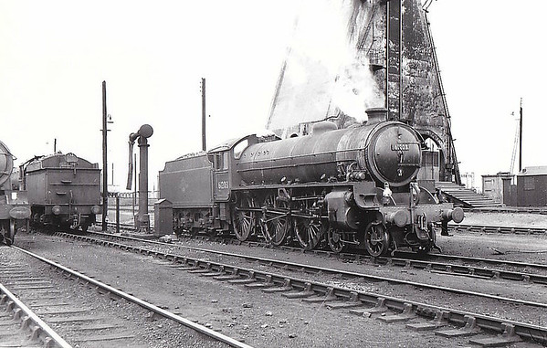 61203 - Thompson LNER/BR Class B1 4-6-0 - built 06/47 by North British Loco. Works as LNER No.1203 - 06/49 to BR No.61203 - 07/62 withdrawn from 31B March, where seen 05/60.