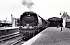 34081 92 SQUADRON - Bulleid SR Battle of Britain/West Country Class 4-6-2 - built 09/48 by Brighton Works - 08/64 withdrawn from 71A Eastleigh - preserved at NVR.