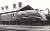 Class B17 - 2859 - Class B17 - 2859  EAST ANGLIAN - Gresley LNER 4-6-0 - built 06/36 by Darlington Works as No.2859 NORWICH CITY - 09/37 renamed EAST ANGLIAN - 10/46 to LNER No.1659, 04/48 to BR No.61659 - 03/60 withdrawn from 32C Lowestoft - 09/37 streamlined, 04/51 streamlined casing removed - seen here at Doncaster Works.