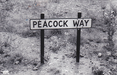 PEACOCK WAY - Nostalgia at Melton Constable. Peacock Way leads of Marriott Way, both roads on the industrial estate that now stands where the Works stood.