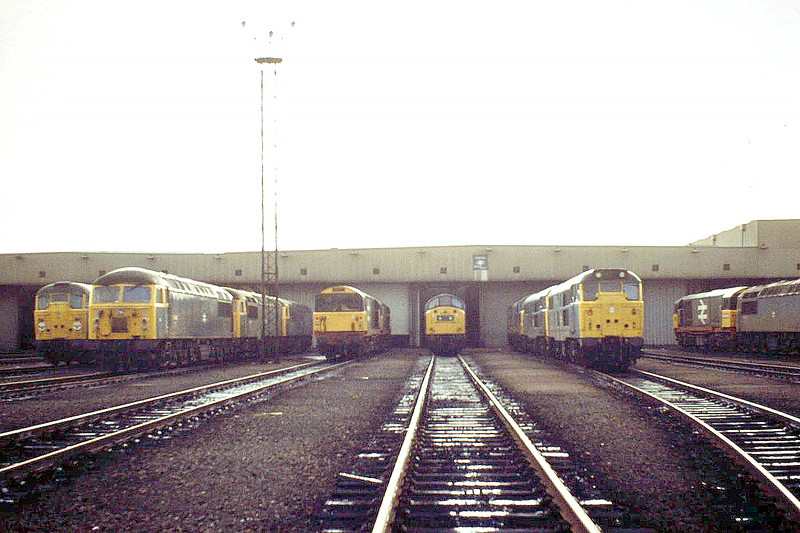 TOTON DEPOT - seen here on 03/11/84, with locos of Classes 31, 40, 56 and 58 in evidence.