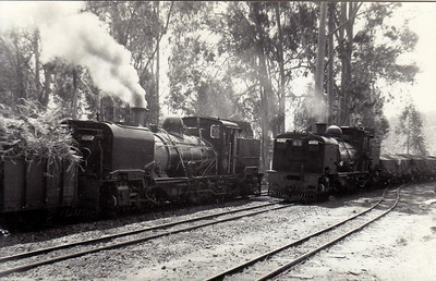 SOUTH AFRICA - SAR - Class NG16 2ft gauge 2-6-2+2-6-2 Garratts cross each other at Umzinto, No.113 (Beyer Peacock 1939) waiting with a load of sugar cane for Crooke's Sugar Mill as No.155 (Hunslet Taylor 1968) enters the loop, 05/73. 113 is preserved.