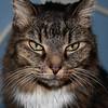 Carmela's  Cat