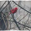 City Cardinal