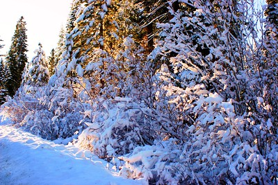 SNOW - LAKE TAHOE BY SILVANA STUMPF