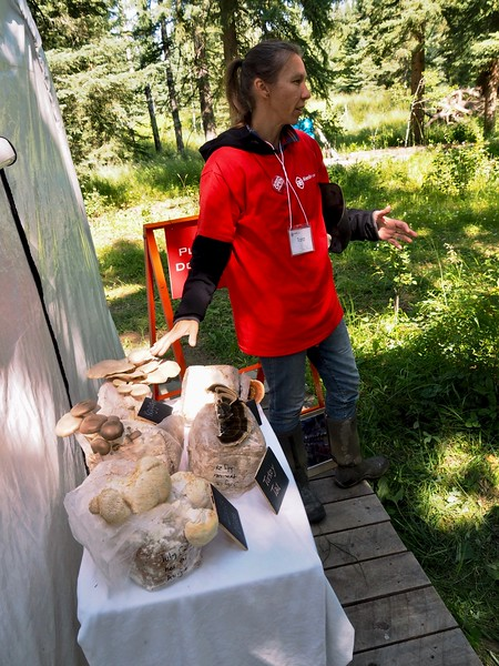 Education on the variety of mushrooms grown here.
