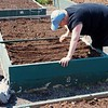 Rebuilding compost bins and community garden work