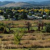 My Kelowna home is just across the road from the Temple. <br /> <br /> And the field I mentioned  a few photos back, next to the road and yellow aspens, this is it.