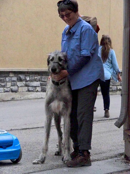 Donna LOVES dogs, and in this case it is an Irish Wolfhound. <br /> <br /> To my surprise, although these dogs are gentle and make good pets, they can kill a pit bull without much of a fight at all in an open field.   Go figure.