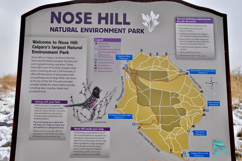 There are 8 access points into Nose Hill park.  I entered from the Berkley Bate/Porcupine Valley Parking Lot not where the STAR suggests.