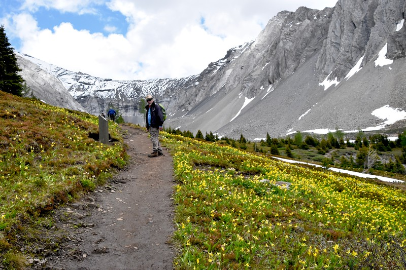 Avalanche lilies and Chuck. <br /> <br /> These lilies flower shortly after snow melt in early spring in subalpine woodlands and alpine meadows which we wii be in until we head back down.