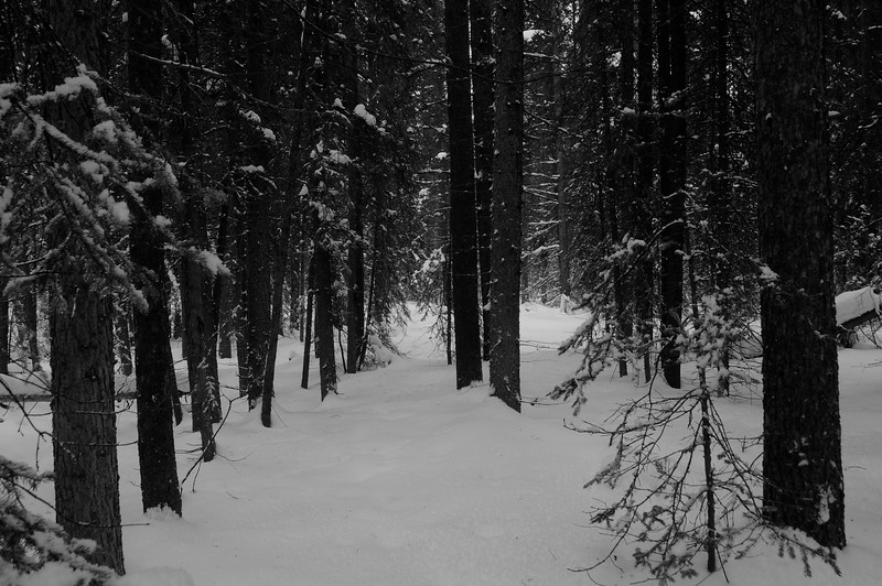 Once back at the hostel, I laced up my snowshoes and took a wander through the trees until potluck time.