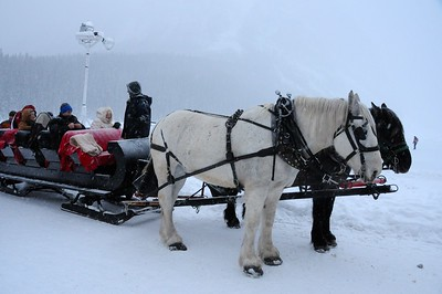 The sleigh ride along the north-west shore of Lake Louise is a free and popular experience.