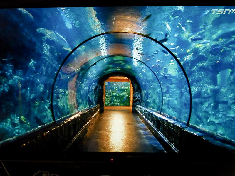 Vic Router was doing a report on this aquarium and he was in my way.  I toggled until he left the picture before I clicked the shutter.