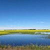 Canola field and a slough.