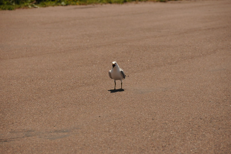 This bird may be beaking off because we're taking up his parking spot--or he's saying feed me!
