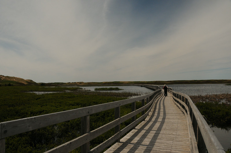 A 3/4 of a kilometre boardwalk towards the sand dunes in the distance.  The largest portion of the walkway is floating on Bowley Pond.