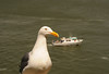 The boat dock is the only place that visitors are allowed to eat on Alcatraz, and you can be sure the seagulls are on hand to greet you there.