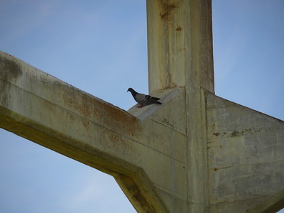 Colonies of cliff swallows once nested under the Aqueduct girders and braces, but today all we could spot were pigeons.