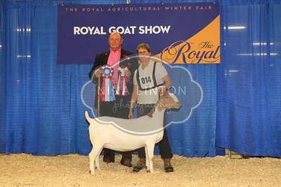 RAWF Boer Goat Show Champions 2016