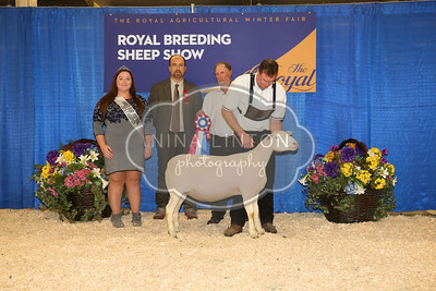 RAWF Breeding Sheep Show AOB Champion and Candid Photos 2016