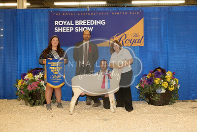 RAWF Breeding Sheep Show Dorset Champion and Candid Photos 2016