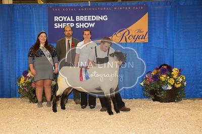 RAWF Breeding Sheep Show Hampshire Champion and Candid Photos 2016